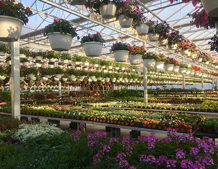 Lavocat's Family Greenhouse